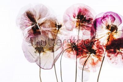 Naklejka wysuszone kwiaty