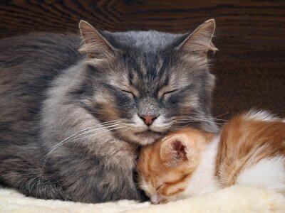 Naklejka Две кошки - мама и ребенок, маленький котенок. Кошка и котенок прижались друг к другу, кошки спят вместе. Кошки семья, мама и малыш любят друг друга. Нежные, ласковые отношения в семье