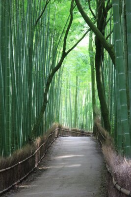 Naklejka 嵯峨野 の 竹林