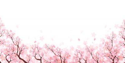 Naklejka 桜 春 花 背景