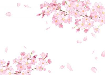 Naklejka 春の花:さくらと散る花びらのフレーム 水彩イラストのトレースベクター