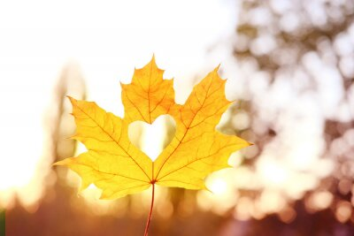 Naklejka yellow leaf with a heart in a female hand, background of golden leaves lie chaotically on the ground, autumn mood concept, seasonal