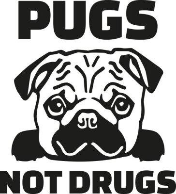 Naklejka Zabawna Mops mówiąc - nie mopsy narkotyki