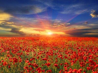 Naklejka Zachód słońca nad pole maku