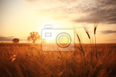 Naklejka Zachód słońca w Europie w polu pszenicy