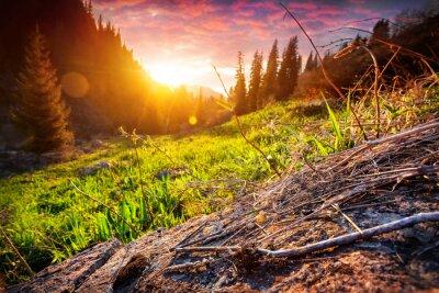 Naklejka Zachód słońca w górach lasu