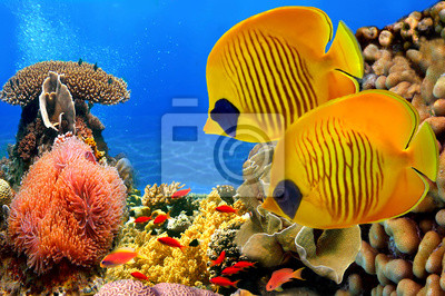 Naklejka Zamaskowany butterfly fish (Chaetodon semilarvatus) i rafa koralowa