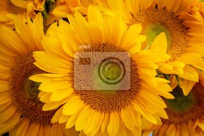 Naklejka Zamyka w górę widoku wiązka słoneczniki.