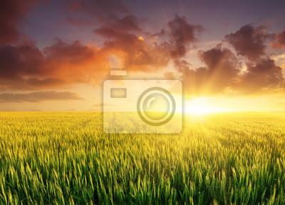 Naklejka Zapisano w czasie jasnym słońca. Krajobrazu rolniczego