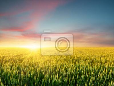 Zapisano w czasie jasnym słońca. Krajobrazu rolniczego w okresie letnim