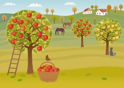 Naklejka Zbiory jabłek