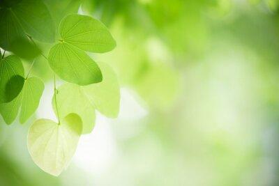 Naklejka Zbliżenie natury widok zielony liść na zamazanym greenery tle w ogródzie z kopii przestrzenią używać jako tło naturalnych zielonych rośliien krajobraz, ekologia, świeży tapetowy pojęcie.