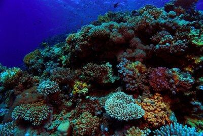Naklejka zdjęcia podwodne rafy koralowej