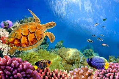 Naklejka Zdjęcie z kolonii koralowców i żółwia