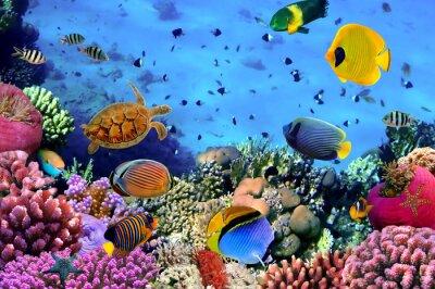 Naklejka Zdjęcie z koralowców kolonii