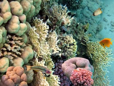 Naklejka Zdjęcie z koralowców kolonii, Morze Czerwone, Egipt