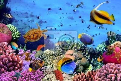 Naklejka Zdjęcie z koralowców kolonii na Rafa, Egipt