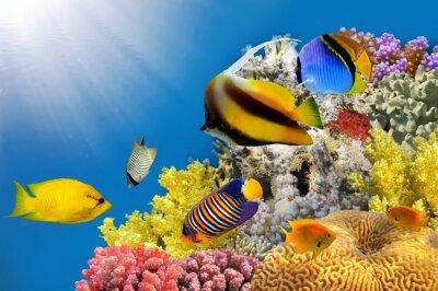 Naklejka Zdjęcie z koralowców kolonii na szczycie rafy