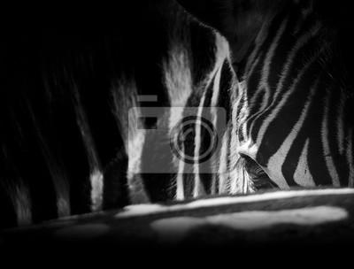 Naklejka Zebra portret na zdjęciu z głową zbliżenie artystycznej konwersji
