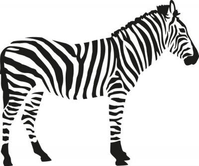 Naklejka Zebra sylwetka isloated na białym tle