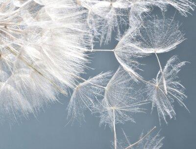 Naklejka Zegary Dandelion: życzenia i marzenia :)
