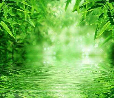 Naklejka Zen Bamboo Forest, słońce i woda.
