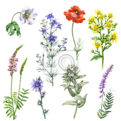 Zestaw Dzikich Kwiatów