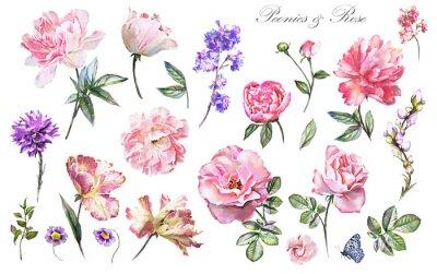 Naklejka Zestaw elementów akwarela kwiat róży, peony, kolekcja ogród i dzikich kwiatów, liści, gałęzi, ilustracja wyizolowanych na białym tle, różowy pączek, zioła