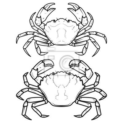 Zestaw ikon kraby na białym tle. elementy konstrukcyjne