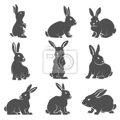 Zestaw ikon królik wyizolowanych na białym tle.