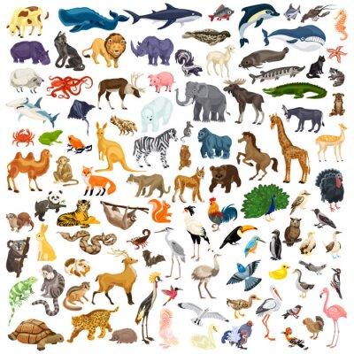 Naklejka Zestaw ikon zwierząt. Cartoon zestaw ikon wektorowych zwierząt do projektowania stron internetowych