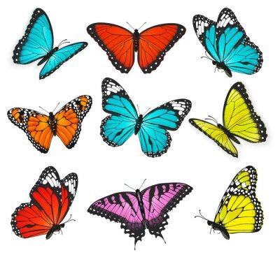 Naklejka Zestaw ilustracji realistyczne kolorowe motyle