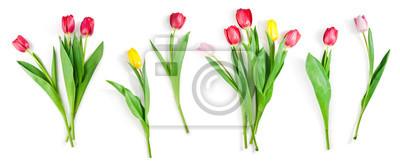 Naklejka zestaw kwiatów tulipanów na białym tle ze ścieżką przycinającą zawarte