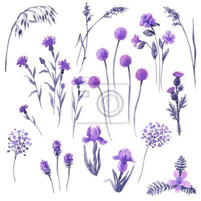 Zestaw kwiaty bzu.