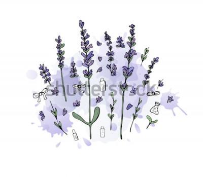 Naklejka Zestaw lawendy w stylu bazgroły. Kwiaty elementy z akwarela splash na białym tle. Ilustracji wektorowych.