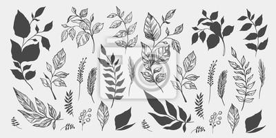 Naklejka Zestaw liści Ręcznie rysowane elementy dekoracyjne. Ilustracji wektorowych