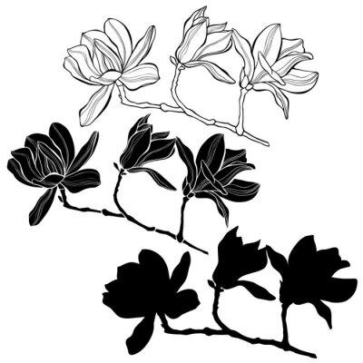 Naklejka Zestaw magnolii na białym tle. Wyciągnąć rękę wektor
