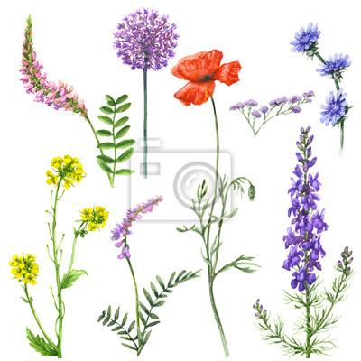 Zestaw Polnych Kwiatów