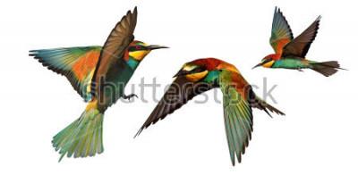 Naklejka zestaw ptaków kolor w locie na białym tle na białym tle