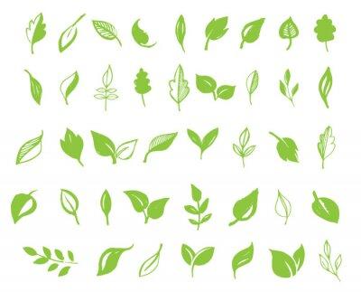 Naklejka Zestaw ręcznie rysowane liści, zielonych liści, szkiców i Doodles liści i roślin zielonych liści wektor kolekcja
