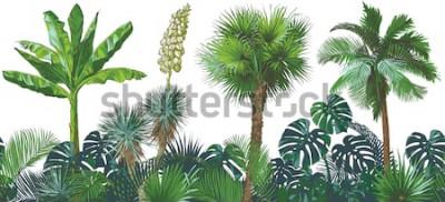 Naklejka Zestaw tropikalnych bananów wzór palmy, monstera, jukka, liść, kolekcja liści owoców. Akwarela realistyczne ilustracje wektorowe. Vintage design