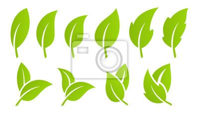 Naklejka Zestaw zielony liść. Eco