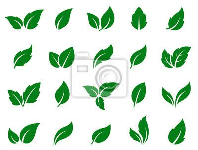 Naklejka zestaw zielonych liści