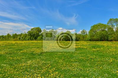 Zielona łąka z mniszka