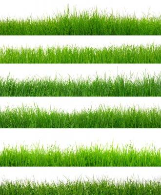 Naklejka zielona trawa