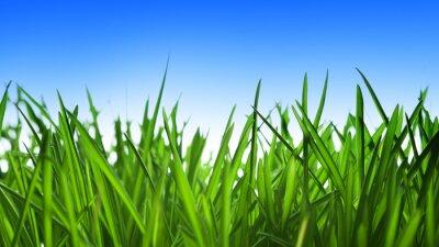 Naklejka zielona trawa i błękitne niebo