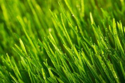 Naklejka Zielona trawa i porannej rosy