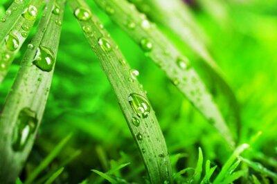 Zielona trawa latem w słoneczny dzień