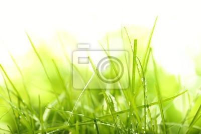 Naklejka zielona trawa, lato i słońce
