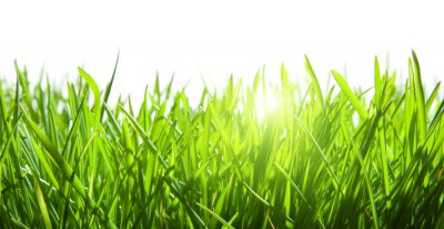 Naklejka Zielona trawa na białym tle